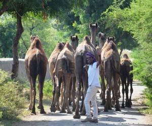 Maganlal assistant herder